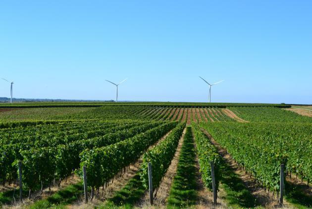 Route des vins du Sud Vendée